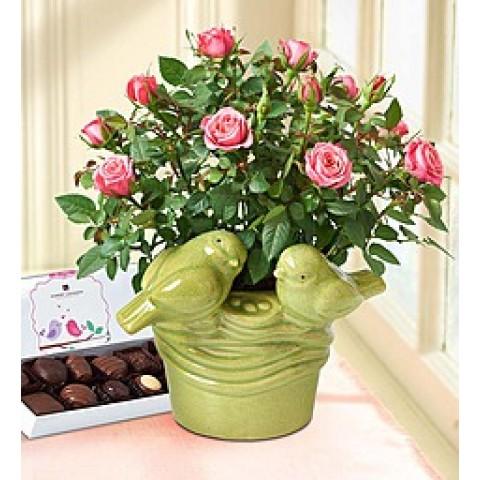 Love Birds Pink Rose