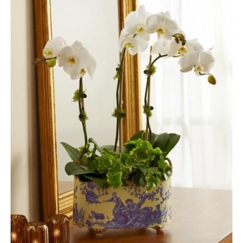 English Orchid Garden