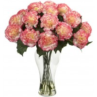Beauty of Carnation