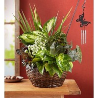 Butterfly Chime Dish Gaden