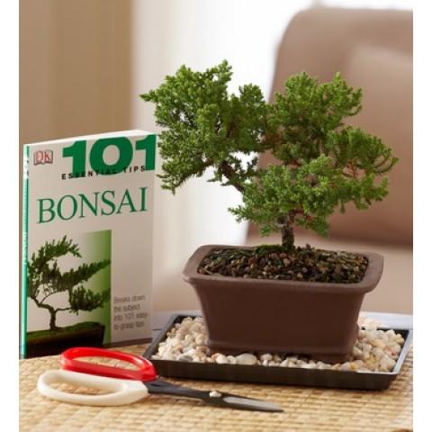 Bonsai Beginner's Set