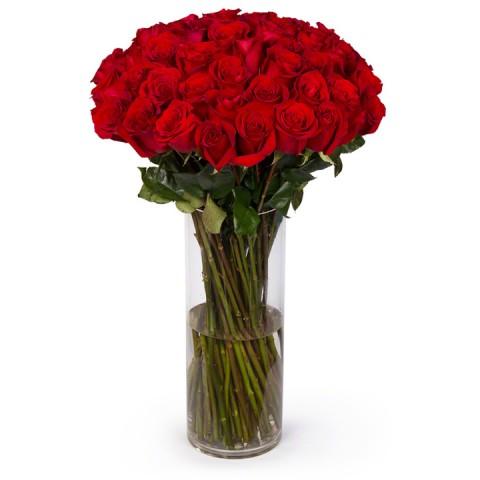 Ultimate Red Long Stem Roses