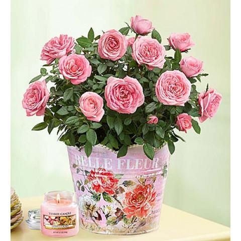 Classic Rose Garden