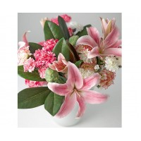 Blush of lily
