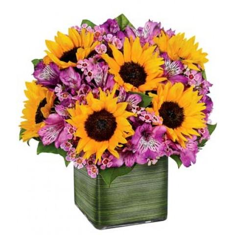 Sunflower Melody