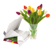 Tulip Party