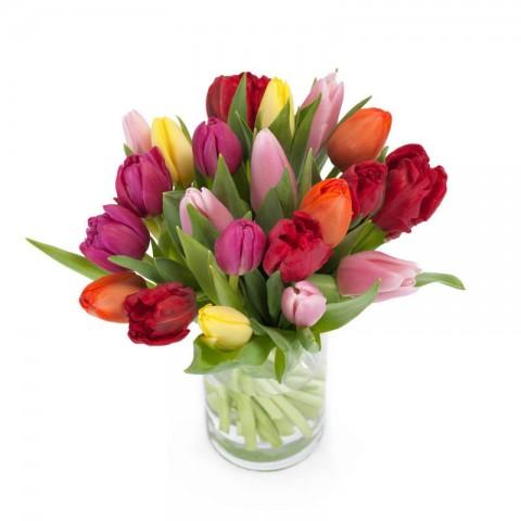 Princess Tulips