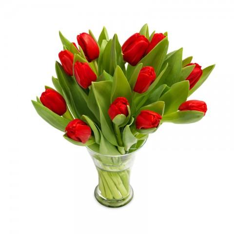Ravishing Red tulips