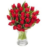 Alluring Tulip