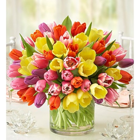 Fresh and Vibrant Blooms