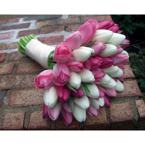 Pinkish White Tulips