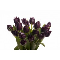 Black tulips bun